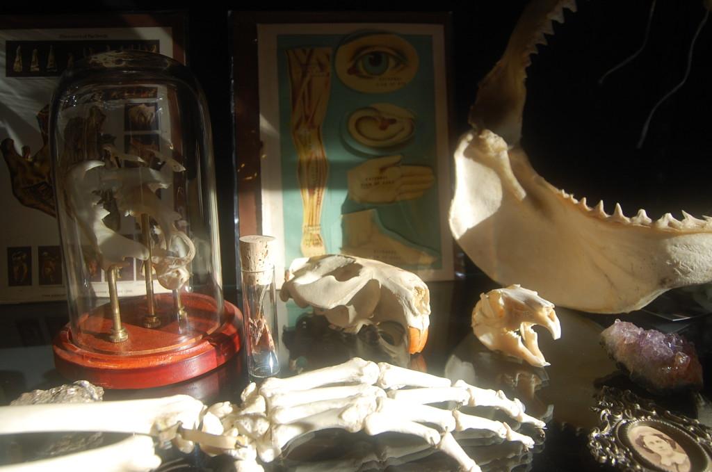 Tomahawk Curiosity Cabinet